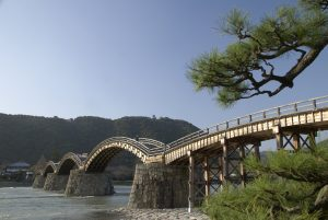 Beautiful Japanese pine tree frames the Kintai Bridge and castle on the ridge.